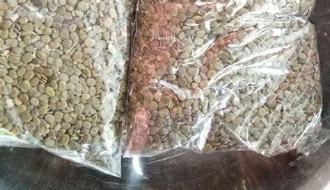 Bibit Sengon Laut Murah jual bibit sengon solomon sengon laut lokal bersertifikat