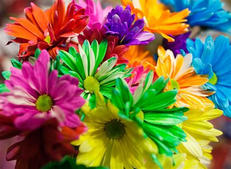 multi colored daisies multi colored bouquet www pixshark images