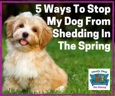 Stop Shedding Dogs by 5 Ways To Stop The From Shedding In The Comfy