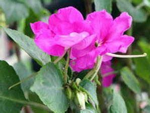 Buku Bugar Dan Cantik Dengan Terapi Air Putih Dan Infused Water Rz khasiat bunga balsam