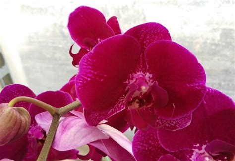 orchid colors new orchid flower colors orchid hub