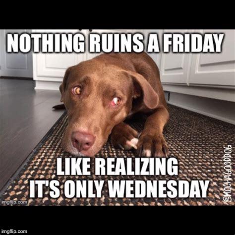 Wednesday Hump Day Meme - wednesday blues imgflip