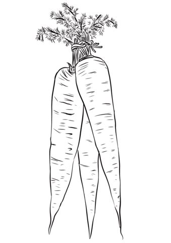long yellow carrots coloring page  printable