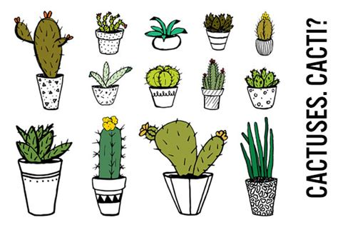 cactus doodle potted cactus drawing