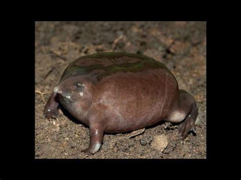 imagenes de animales feos y chistosos estos son los animales m 225 s feos del mundo en peligro de