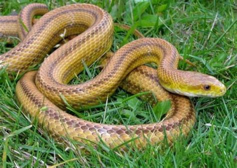 imagenes de animales reptiles informaci 243 n sobre los reptiles informacion sobre animales