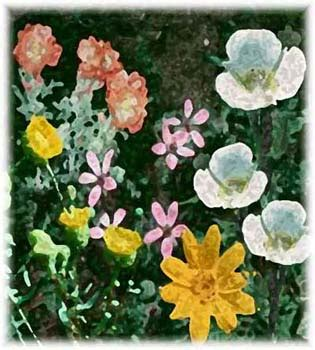 who flowers and plants always want to ut 237 l 237 ze range plants of utah home