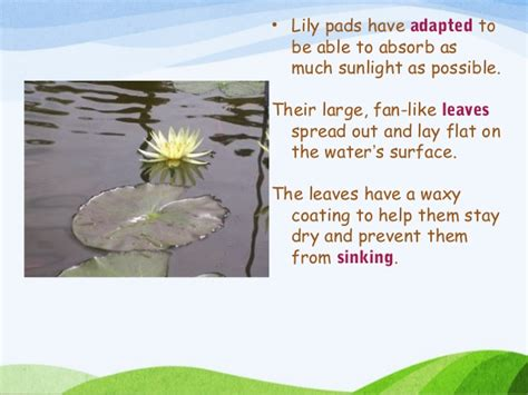 Plants That Do Not Need Much Sunlight by Plant Adaptations