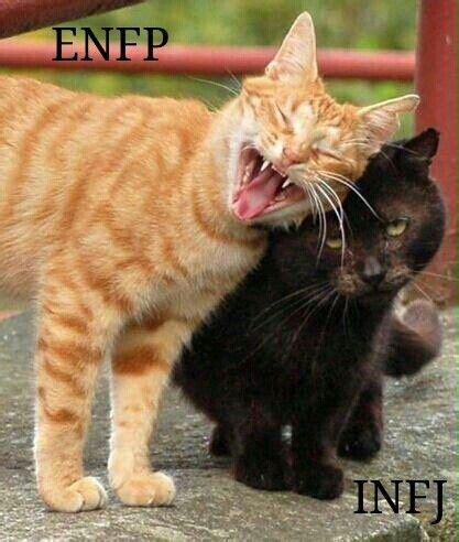 the 25+ best enfp and infj ideas on pinterest | advocate