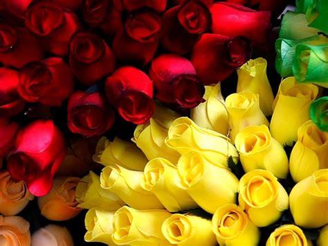 imagenes de rosas amarillas feliz domingo im 225 genes etiquetadas con rosas amarillas p 225 gina 2