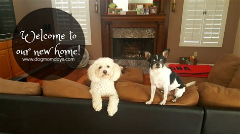 moving to a new house with a dog we re settled into our new home dog mom days