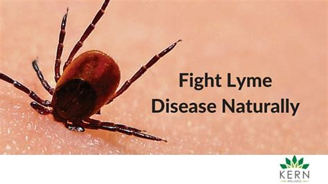 how can a live with lyme disease lyme disease treatment kern wellness