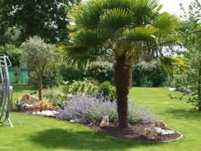 massif avec palmier recherche jardin