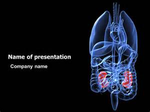 kidney powerpoint template backgrounds 06769