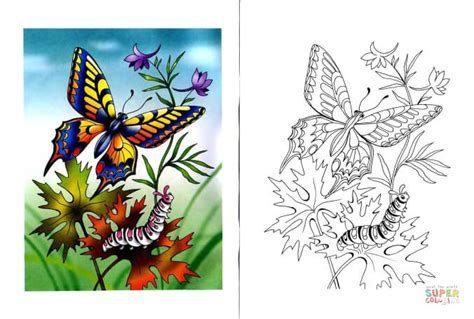 caterpillar and butterfly 2 coloring page supercoloring com swallowtail butterfly and caterpillar coloring page free