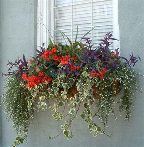 cascading flowers for window boxes against the blue