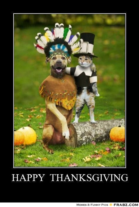 Memes Thanksgiving - happy thanksgiving thanksgiving dog cat meme