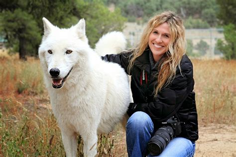 pet wolf 5 most amazing wolf hybrid dogs you seen the pet s smarty just the