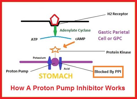 How Proton Inhibitors Work by Standard American Diet Food Talk 4 You