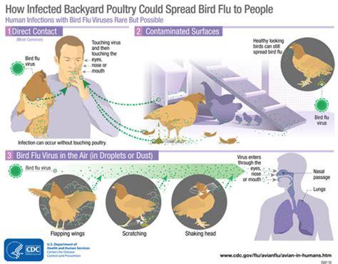 avian l for birds avian influenza a virus infections in humans avian