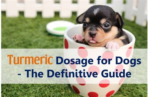 is turmeric safe for dogs turmeric dosage for dogs the definitive guide
