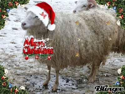 sheep merry christmas picture  blingeecom