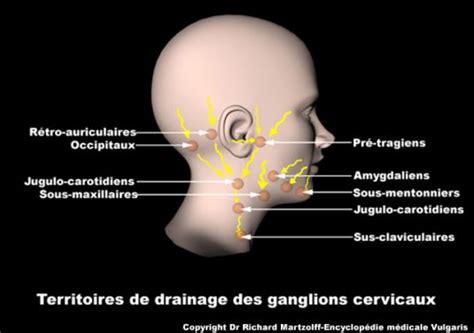 image photo ganglions lymphatiques du cou h 233 matologie