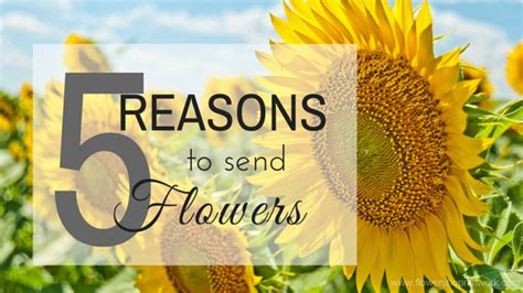 Reasons To Send Flowers by 5 Reasons To Send Flowers August 17