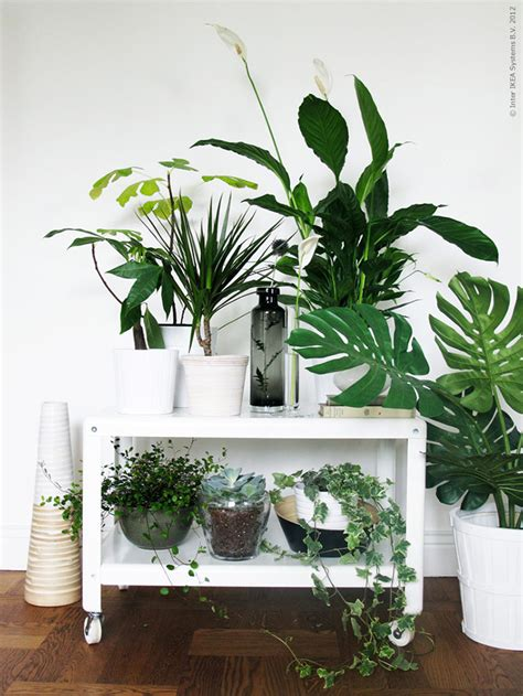 decor plants home 9 gorgeous ways to decorate with plants the nectar