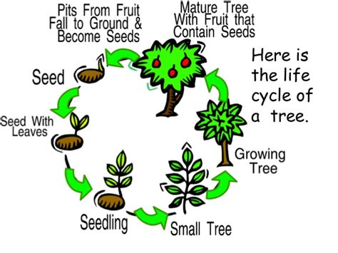 Plant Food That Comes With Flowers by Parts Of A Plant Plant Life Cycle Teach