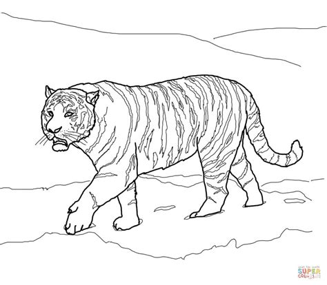 Siberian Tiger Coloring Page siberian or amur tiger coloring page free printable