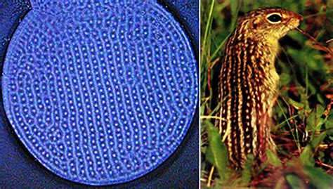 patterns in nature dot point answers this device turns neon plasma into natural patterns pbs