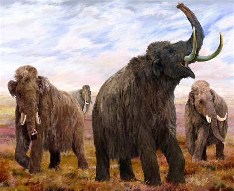 wooly mammoth ice age mammoths ice age giants at natural history museum south