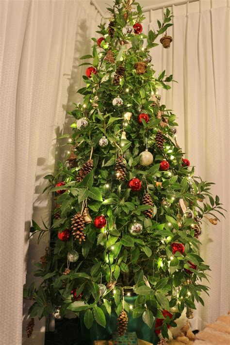 1000 images about laurus nobilis and christmas on