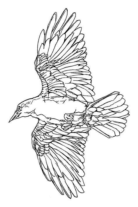 tattoo line drawings raven tattoo line art by smocksinabox on deviantart