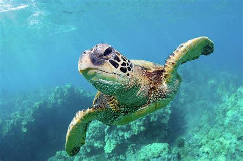 google images turtle sea turtle photography google search sea turtles