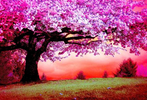 wallpaper pink trees pink trees full hd wallpaper and background image