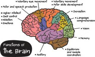 a slice of lyme lyme on the brain part 1 the basics