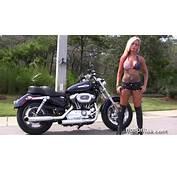 Used 2013 Harley Davidson 1200 Custom Motorcycles For Sale