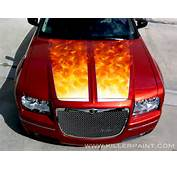 Dodge Magnum Big Cat Rescue And Cats On Pinterest