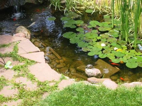 Backyard Turtle Habitat habitat guidelines outdoor ponds for aquatic turtles colorado reptile humane society ted