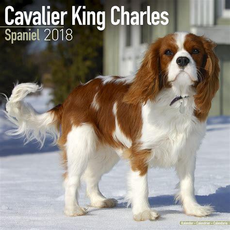 cavalier king cavalier king charles calendar 2018 pet prints inc