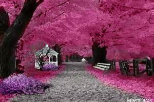 Fall Flower Gardens - glorious stinking pink autumn day d gardenpuzzle