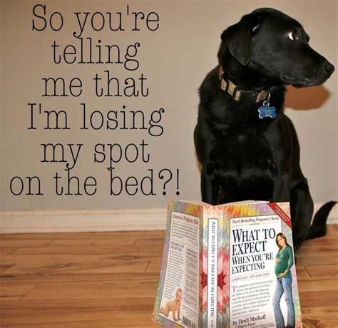 libro black dogs 9 anuncios de embarazo originales con mascotas