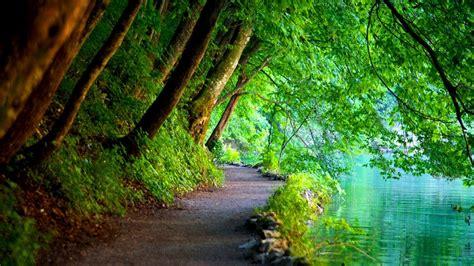 wallpaper sinar matahari pohon pemandangan alam