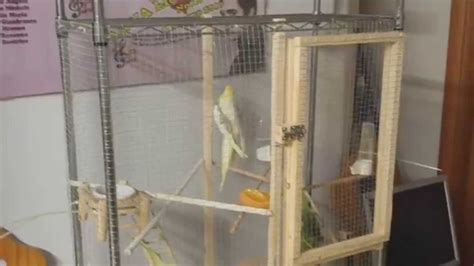 gabbia pappagalli fai da te calopsite voliera fatta in casa quot fai da te quot