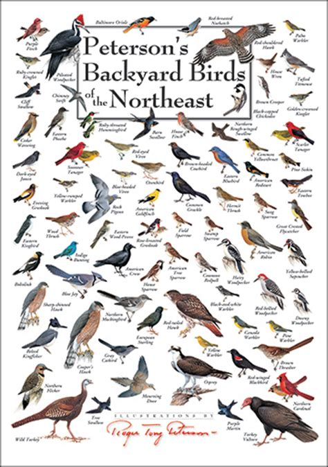 peterson backyard birds foldingguides com peterson s backyard birds of the