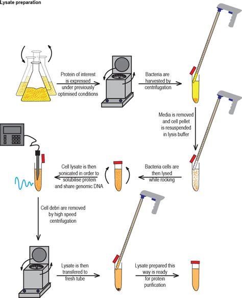 protein 4 pets biofreaks biochemistry v beta