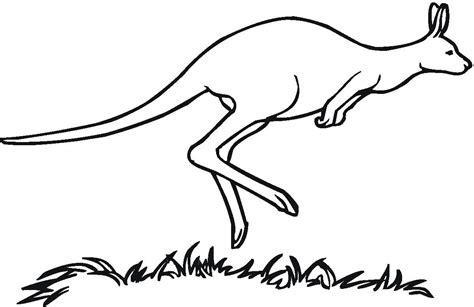 printable kangaroo template free printable kangaroo coloring pages for kids