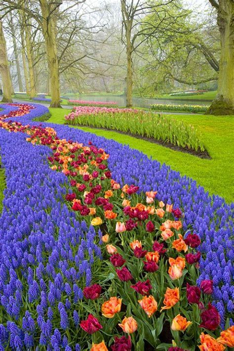Keukenhof Gardens Near Amsterdam Netherlands Flower Garden In Amsterdam